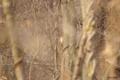 [北海道][ウトナイ湖][鳥]アカゲラ @ウトナイ湖