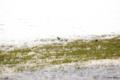 [北海道][函館][五稜郭][鳥]シジュウカラ I @函館五稜郭公園