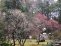 [東京][靖国神社][花][梅]梅園 @靖国神社