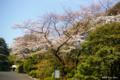 [東京][花][桜]東京都庭園美術館の桜 I