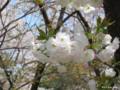 [九州][花][桜]