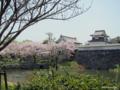 [九州][花][桜]福岡城址潮見櫓と桜 II