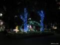 [東京][上野][夜景]上野公園イルミネーション I 「恋人たちの森」