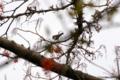 [東京][鳥](名称不明) @国立科学博物館付属自然教育園