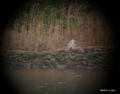 [東京][鳥]アオサギ 望遠鏡で覗いてみた @東京港野鳥公園