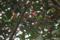 メジロ @東京港野鳥公園