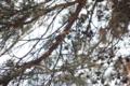 [東京][鳥][新宿御苑]シジュウカラ @新宿御苑