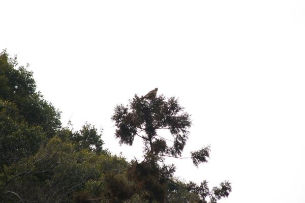 f:id:Terra-Khan:20120213122201j:image