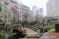 [花][梅][東京][湯島天神]梅園 @湯島天神