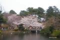 [東京][花][桜]桜 @新宿御苑