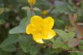 [北海道][富良野][花] @森のガーデン美術館