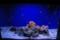 クマノミとイソギンチャクの水槽 @おたる水族館