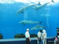 [横浜][八景島シーパラダイス][水族館]「ドルフィン ファンタジー」イルカ水槽