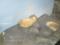 お昼寝中のホッキョクグマ @八景島シーパラダイス