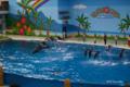 [横浜][八景島シーパラダイス][水族館]10頭のイルカがジャンプ! @海の動物たちのショー「ウェリナ アロハ」