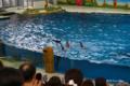 [横浜][八景島シーパラダイス][水族館]「バイバーイ」 @海の動物たちのショー「ウェリナ アロハ」