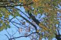 [自然教育園][鳥]メジロ @国立科学博物館付属自然教育園