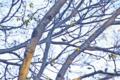 [自然教育園][鳥]? @国立科学博物館付属自然教育園