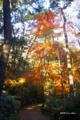 [自然教育園][紅葉]紅葉 @国立科学博物館付属自然教育園