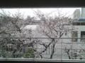 [東京][桜]病室からの桜