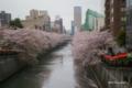 [花][桜][東京]目黒川の桜 I