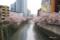 目黒川の桜 II