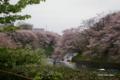 [花][桜][東京]千鳥ヶ淵の桜 I