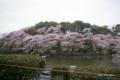 [花][桜][東京]千鳥ヶ淵の桜 II