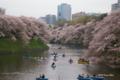 [花][桜][東京]千鳥ヶ淵の桜 III
