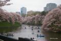 [花][桜][東京]千鳥ヶ淵の桜 IV