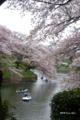 [花][桜][東京]千鳥ヶ淵の桜 V