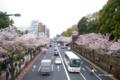 [花][桜][東京]靖国通りの桜