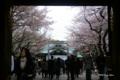 [花][桜][東京][靖国神社]靖国神社の桜 I