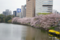[花][桜][東京][外濠公園]外濠公園の桜 @市ヶ谷