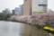 外濠公園の桜 @市ヶ谷