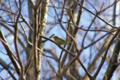 [鳥][東京港野鳥公園]メジロ @東京港野鳥公園