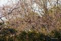 [鳥][東京港野鳥公園]? @東京港野鳥公園