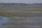 野付湾のゼニガタアザラシとナラワラ遠景