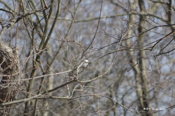 [北海道][鳥][ウトナイ湖]