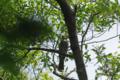 [北海道][鳥]ヒヨドリ @ウトナイ湖