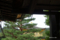 鹿苑寺(金閣寺) 陸舟の松に留まる鳳凰像