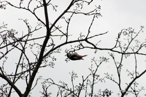 [北海道][鳥]