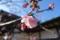 五社神社・諏訪神社 梅の花