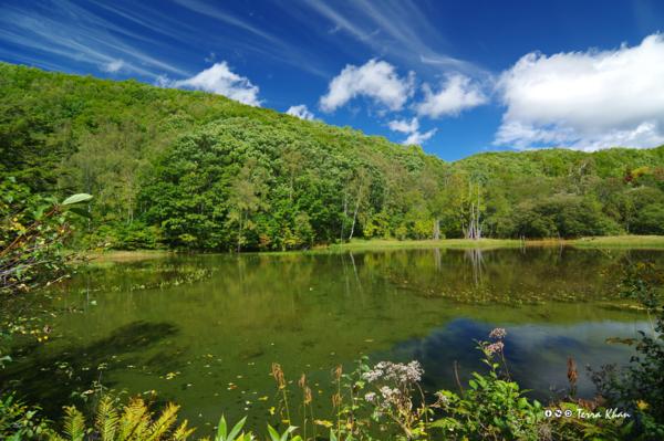 一の瀬園地 あざみ池