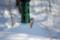 餌を啄むゴジュウカラ @ウトナイ湖