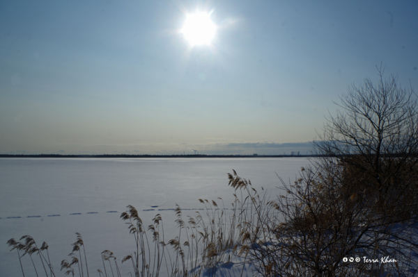 全面結氷したウトナイ湖