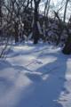 [北海道][冬景色][ウトナイ湖]誰の足跡?