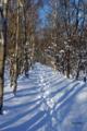 [北海道][冬景色][ウトナイ湖]冬の散策路