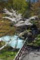[長野県]泡の湯温泉 大露天風呂と山桜