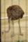 [旭山動物園][動物][鳥]